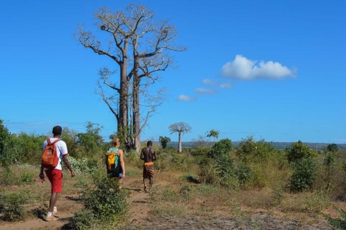 Begidro à Tsimafana, Tsiribihina, Morondava 3