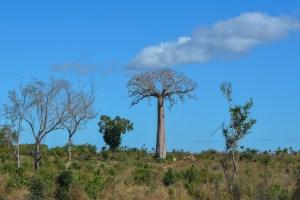 Begidro à Tsimafana, Tsiribihina, Morondava, Madagascar 62