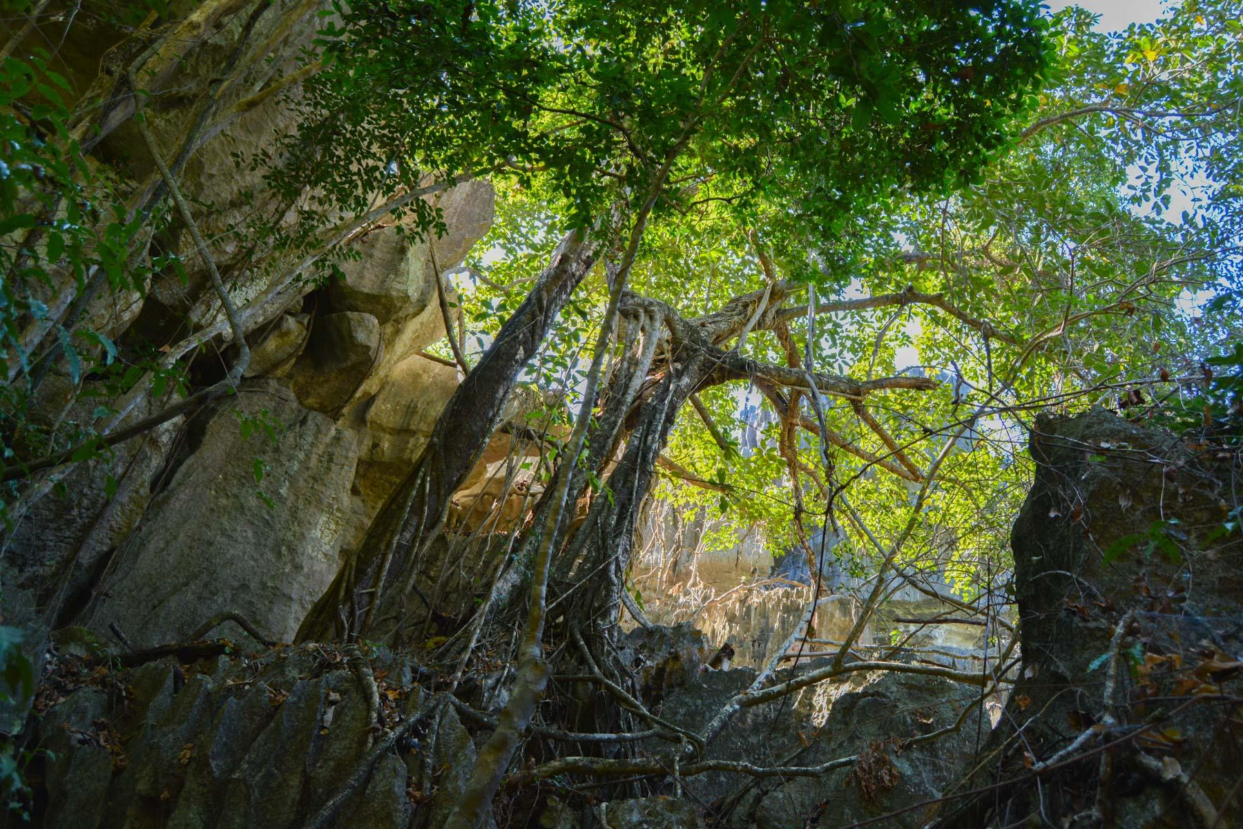 Tsingy de Bemaraha, Bekopaka 19