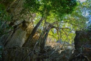 Tsingy de Bemaraha, Bekopaka 22