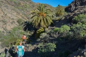 Montaña de Tauro, Gran Canaria 10
