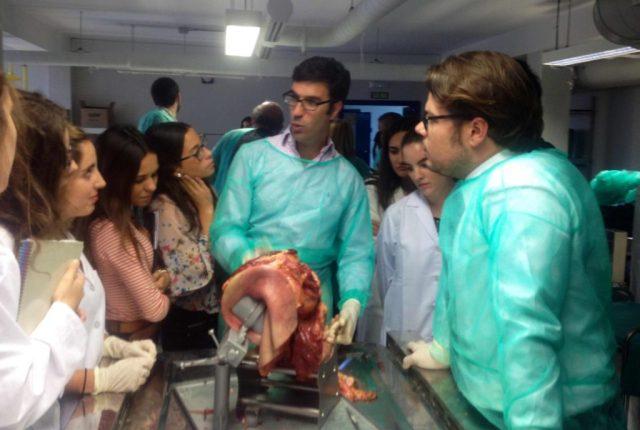 DR BERNALDEZ DISECCION BRAZO CADAVER V CURSO INSTRUCCION HOMBRO Y CODO GRANADA OCT 2014.