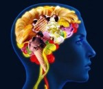 Comer alimentos con alto contenido en grasas genera mayor inflamación cerebral en machos que en hembras, según revela un estudio en ratones.