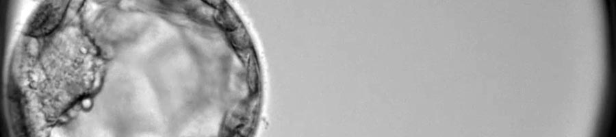 Calidad embrionaria y cromosomas