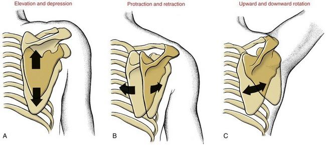 Image result for planes of motion shoulder