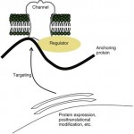 Channelopathies: Episodic and Electrical Disorders of the Nervous System