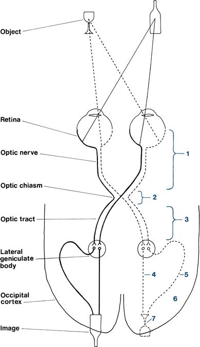 Cranial Nerves The Eye 1 Pupils Acuity Fields