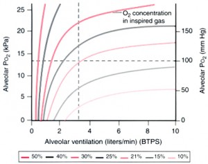 alveolar ventilation and oxygenation