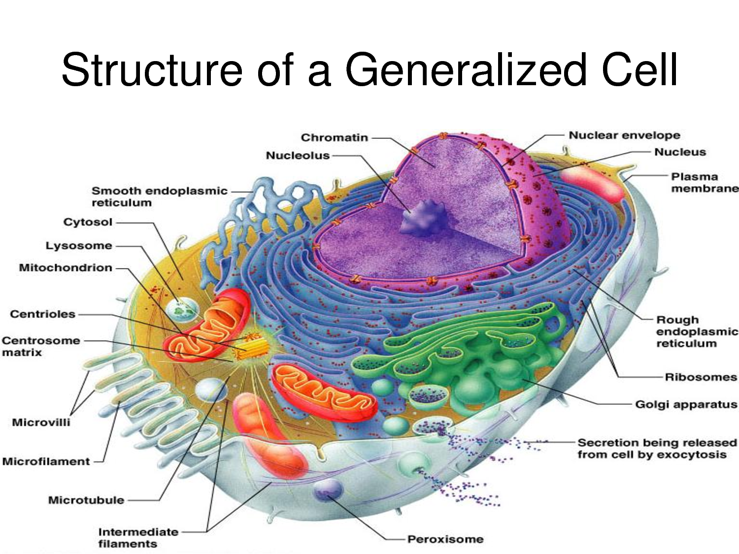 Cell Physiology Pathophysiology And The Relationship To