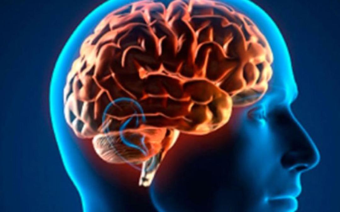 ¿Cómo proteger la salud de tu cerebro?