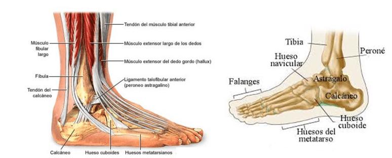Lesiones de tobillo - Clínica Martín Gómez Traumatólogos