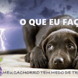 Pet Home Medo Trovão