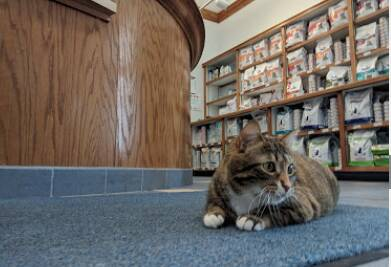 Kentwood Cat Clinic Services