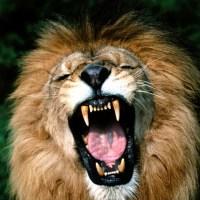 The Lion Cometh (3)