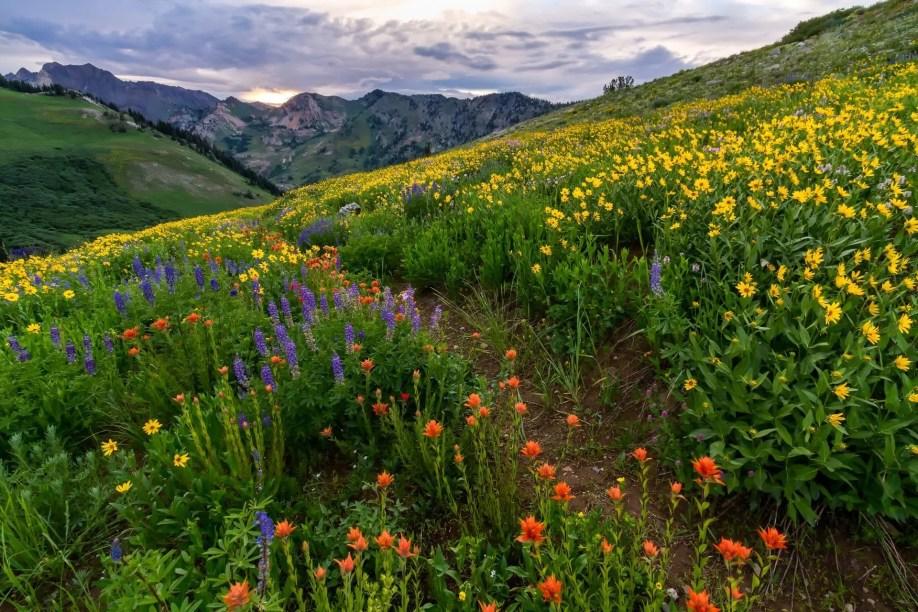 Wild Beauty - Landscape Photography
