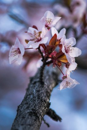 Blossom of Life - Nature Flower Photography