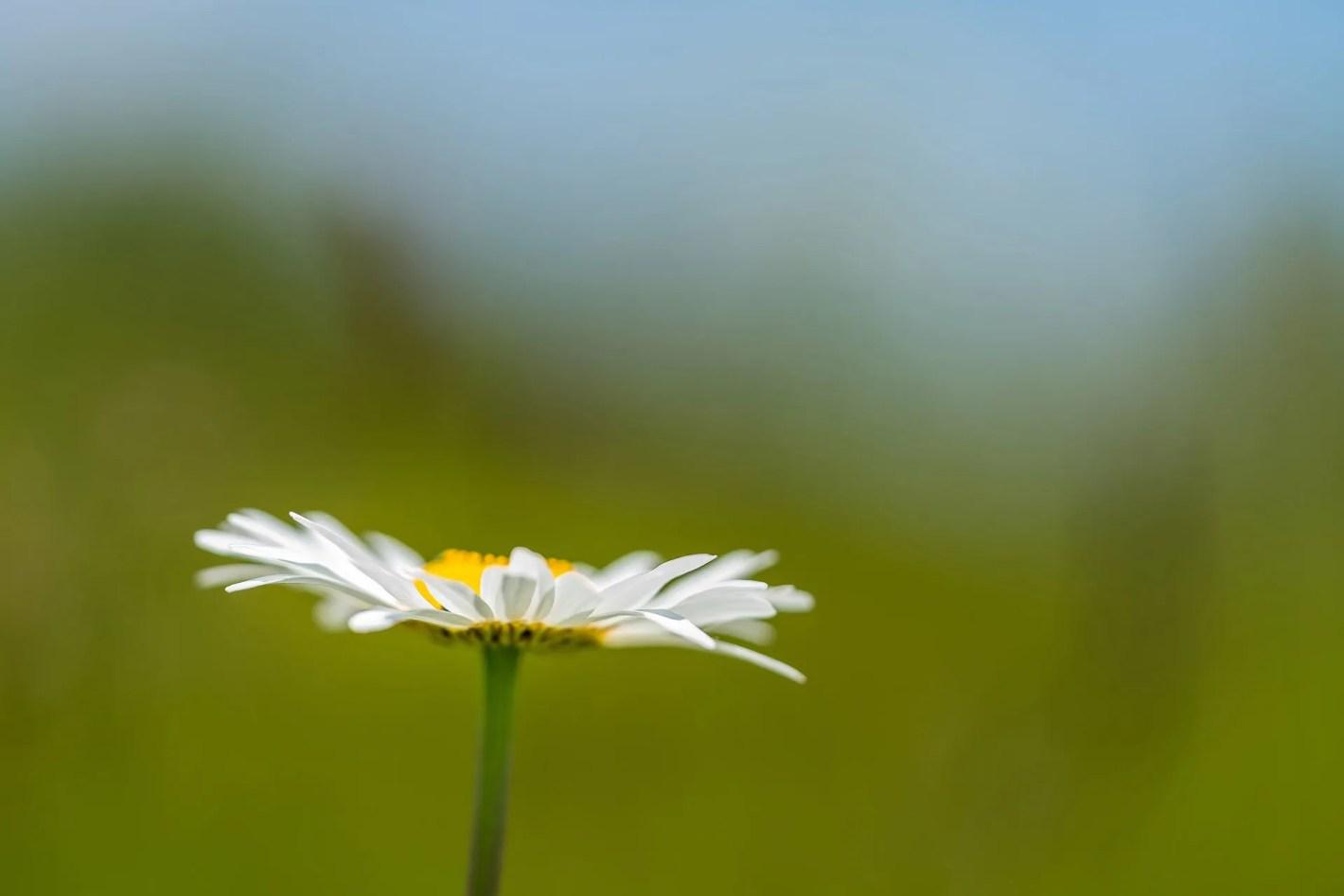 Forgotten Yesterdays - Wildflower Nature Photography