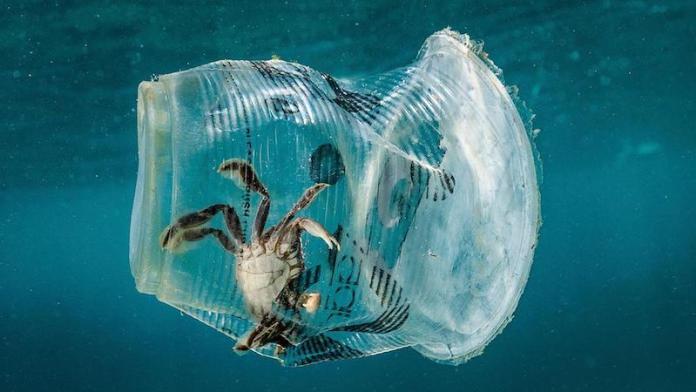 cliomakeup-Giornata-Mondiale-degli-Oceani-2019-7-emergenza-plastica