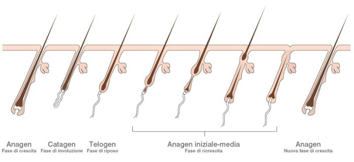 cliomakeup-epilazione-laser-diodo-808-3-fasi-crescita-pelo-anagen