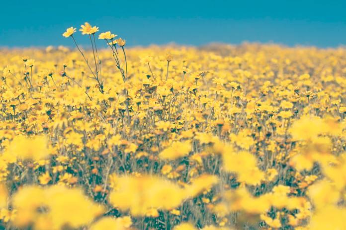 cliomakeup-colori-pastello-primavera-2020-4-giallo