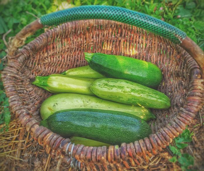 cliomakeup-ricette-veloci-4-zucchine