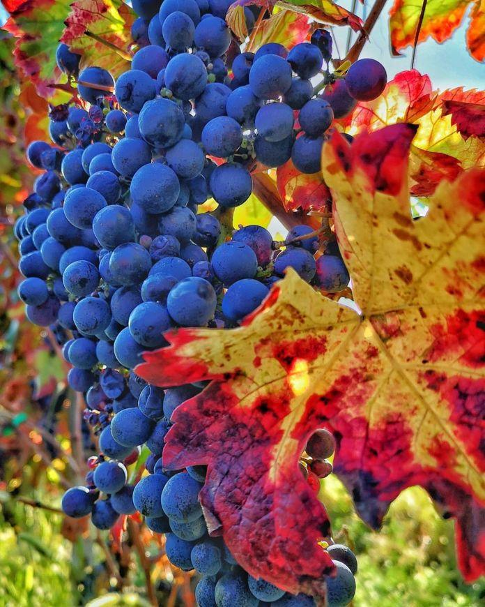 cliomakeup-viaggi-italia-autunno-4-piacentini