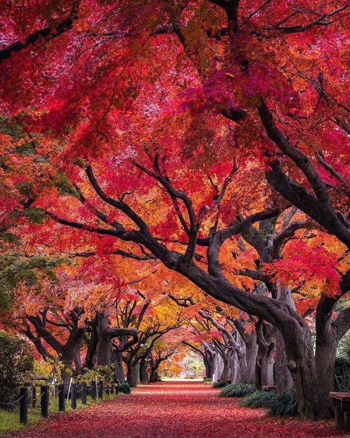 cliomakeup-viaggi-italia-autunno-5-foliage