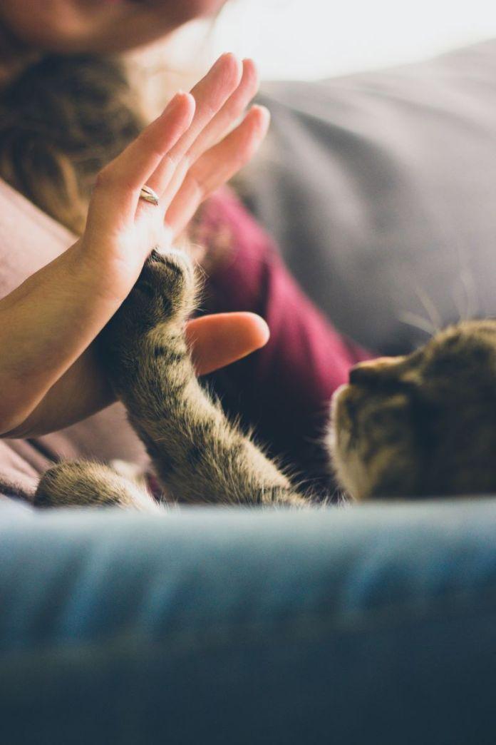 Cliomakeup-cibi-da-evitare-in-gravidanza-18-gatto