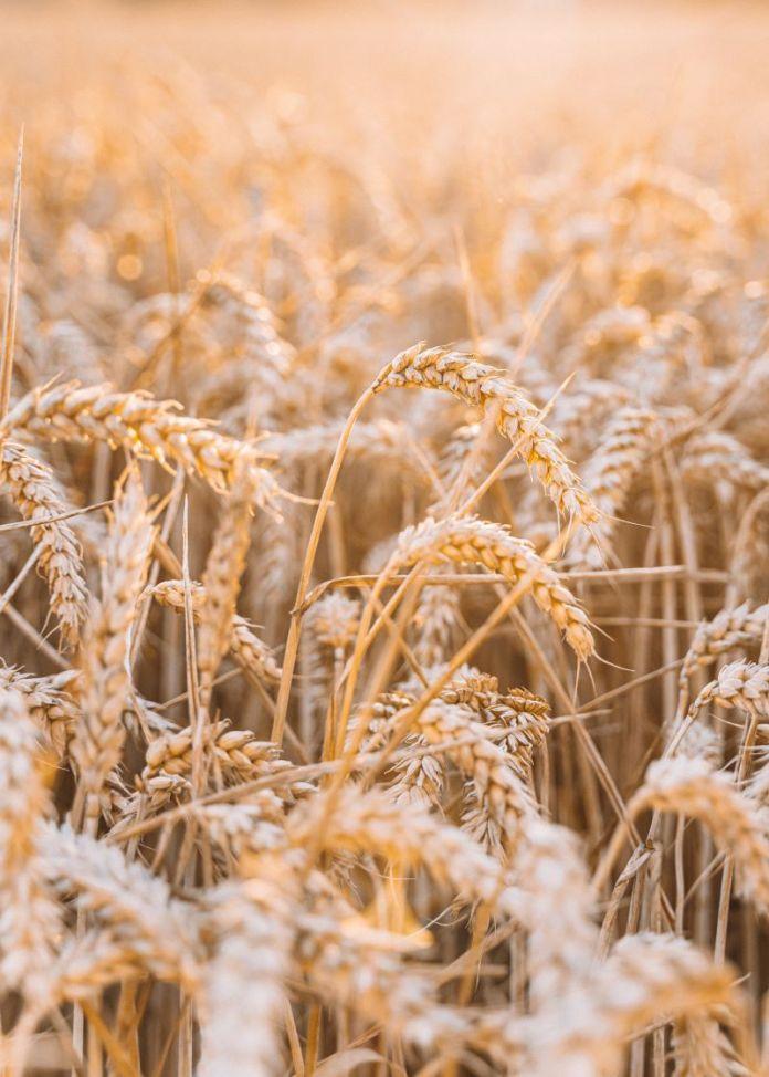 Cliomakeup-prodotti-biologici-11-agricoltura