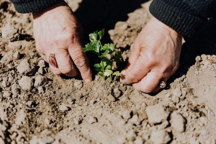 Cliomakeup-prodotti-biologici-14-coltivare.