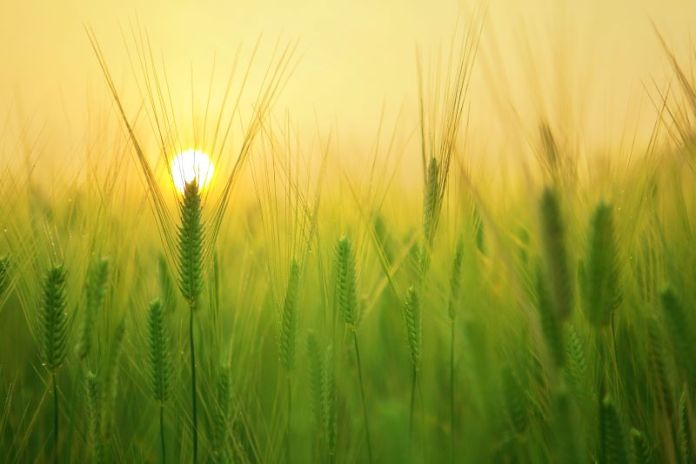 Cliomakeup-prodotti-biologici-5-agricoltura