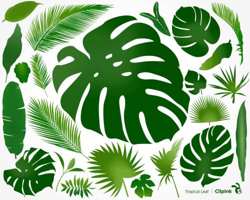 Tropical Leaf Png Clipink Tropics jungle tropical rainforest, green coconut leaves, watercolor leaves, leaf, plant stem png. tropical leaf png clipink