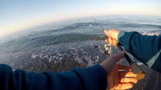 serra in mangianza su pesce foraggio