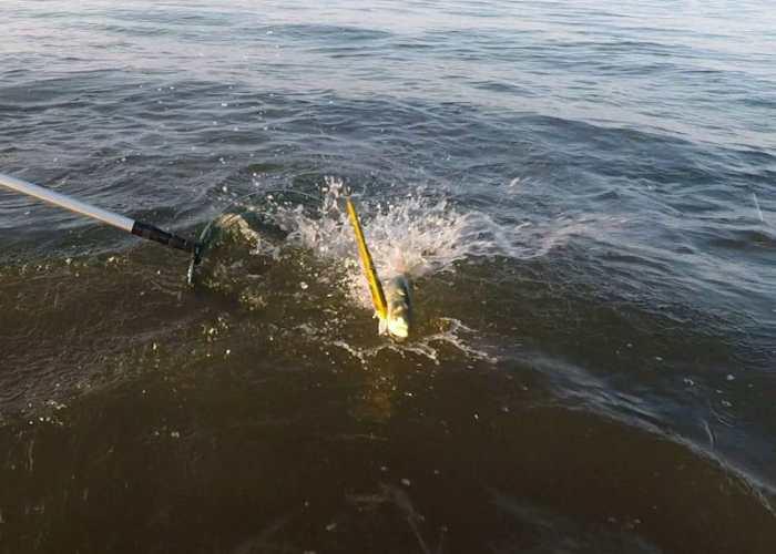 serra attacca in topwater