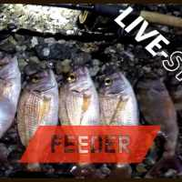 FEEDER FISHING in mare