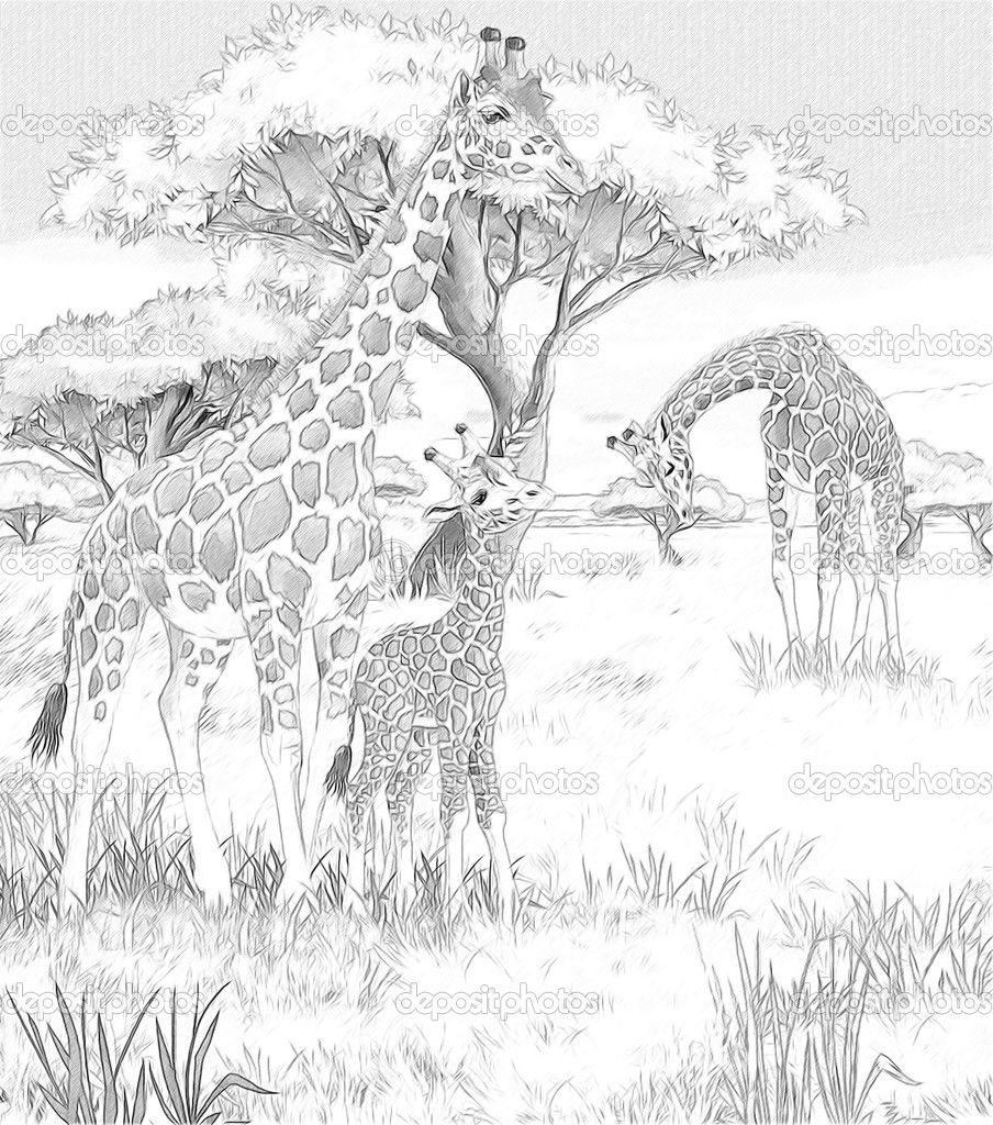 Free Adult Coloring Pages Safari Download Free Clip Art Free Clip Art On Clipart Library