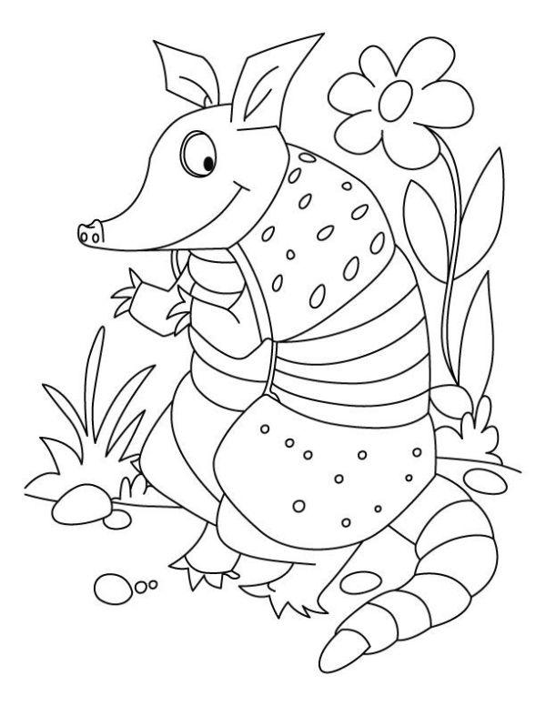 armadillo coloring page # 8