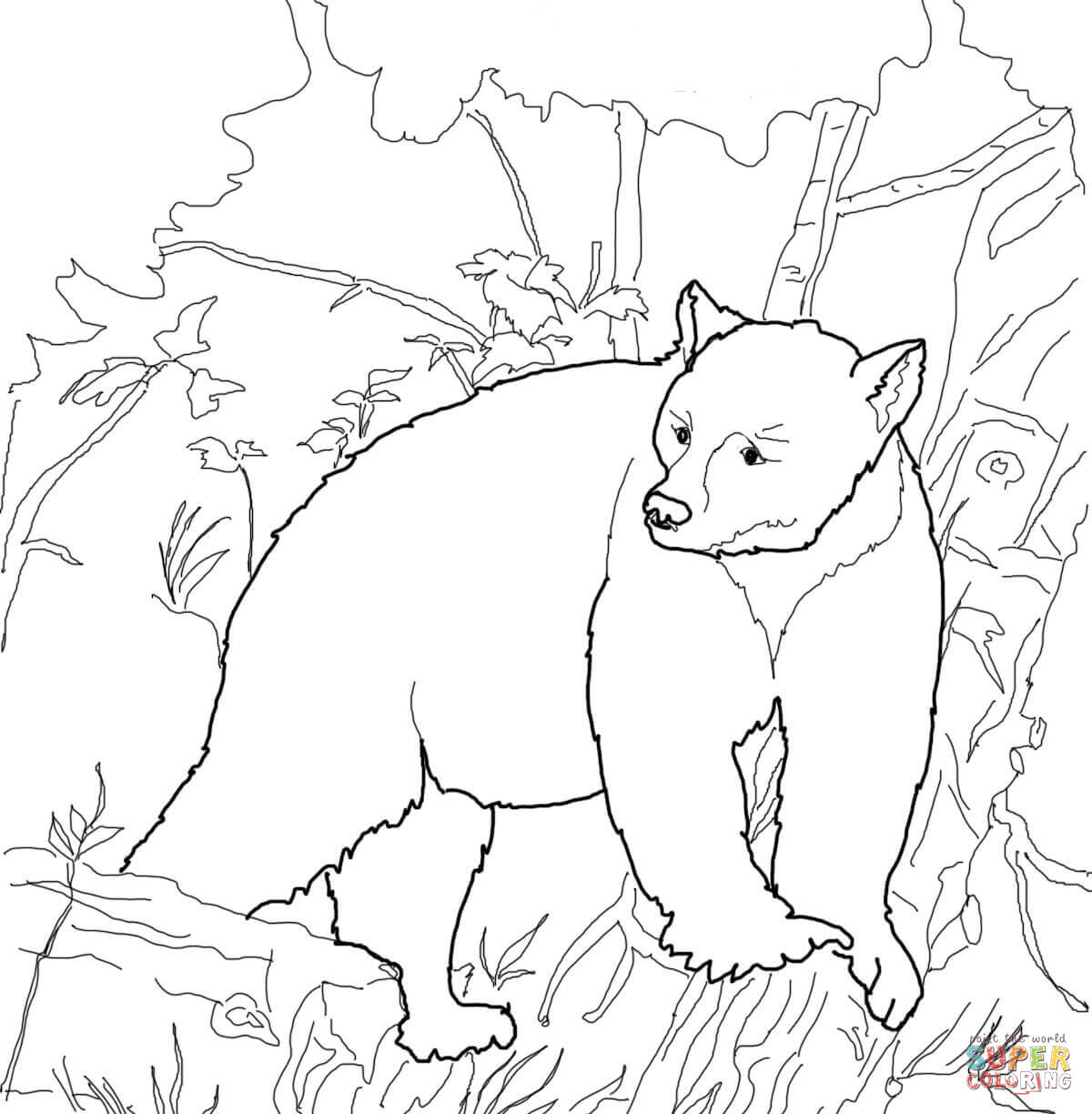 American Black Bears Coloring Pages