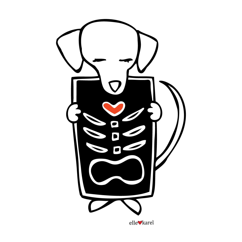Dog X Ray Clipart