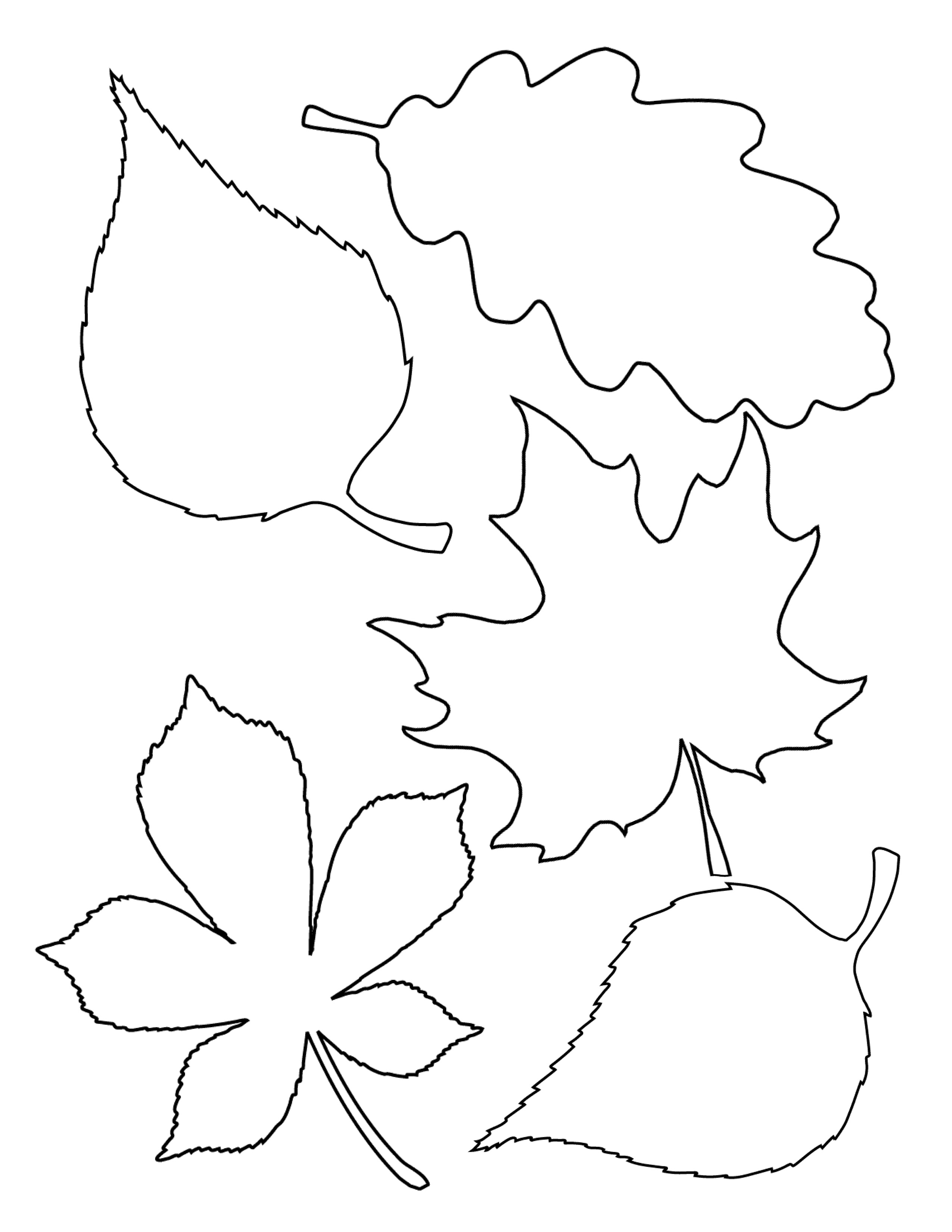 Free Leaf Template Download Free Clip Art Free Clip Art