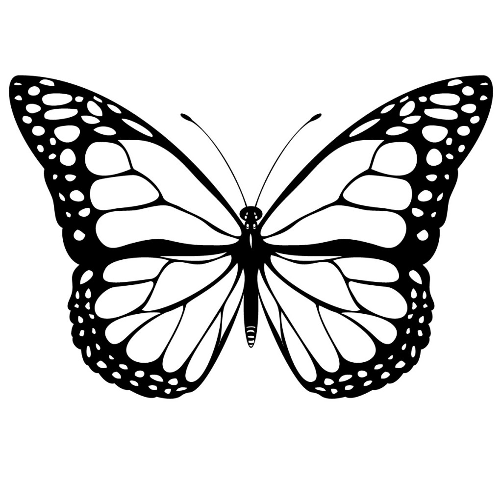 Free Realistic Butterfly Download Free Clip Art Free Clip Art On Clipart Library