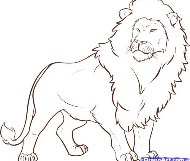 Lion Sketch Viralnova