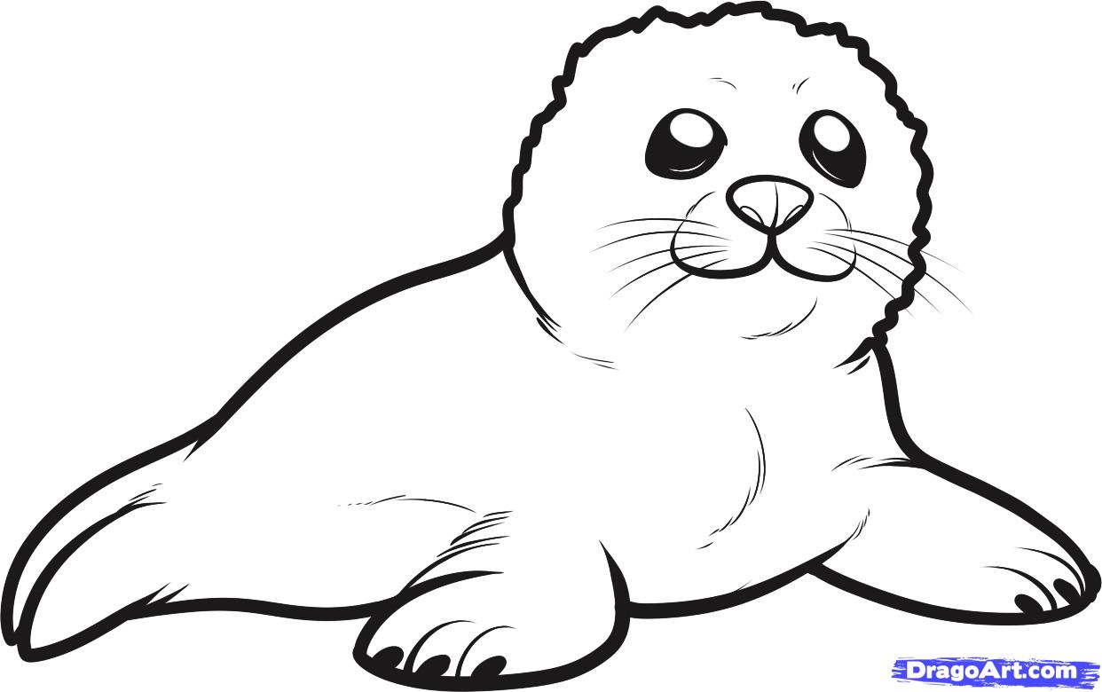 Cute Harp Seal Baby Coloring Page