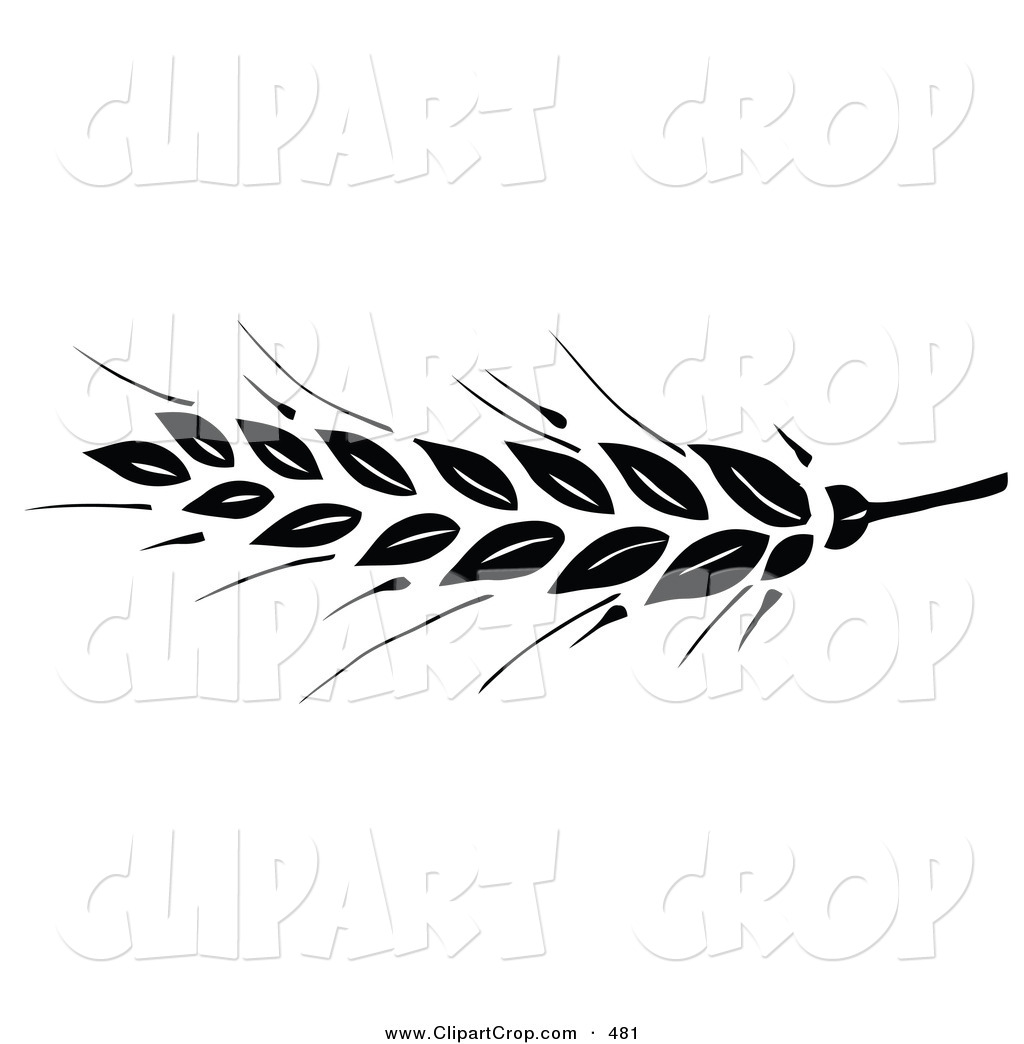 Free Wheat Vector Download Free Clip Art Free Clip Art