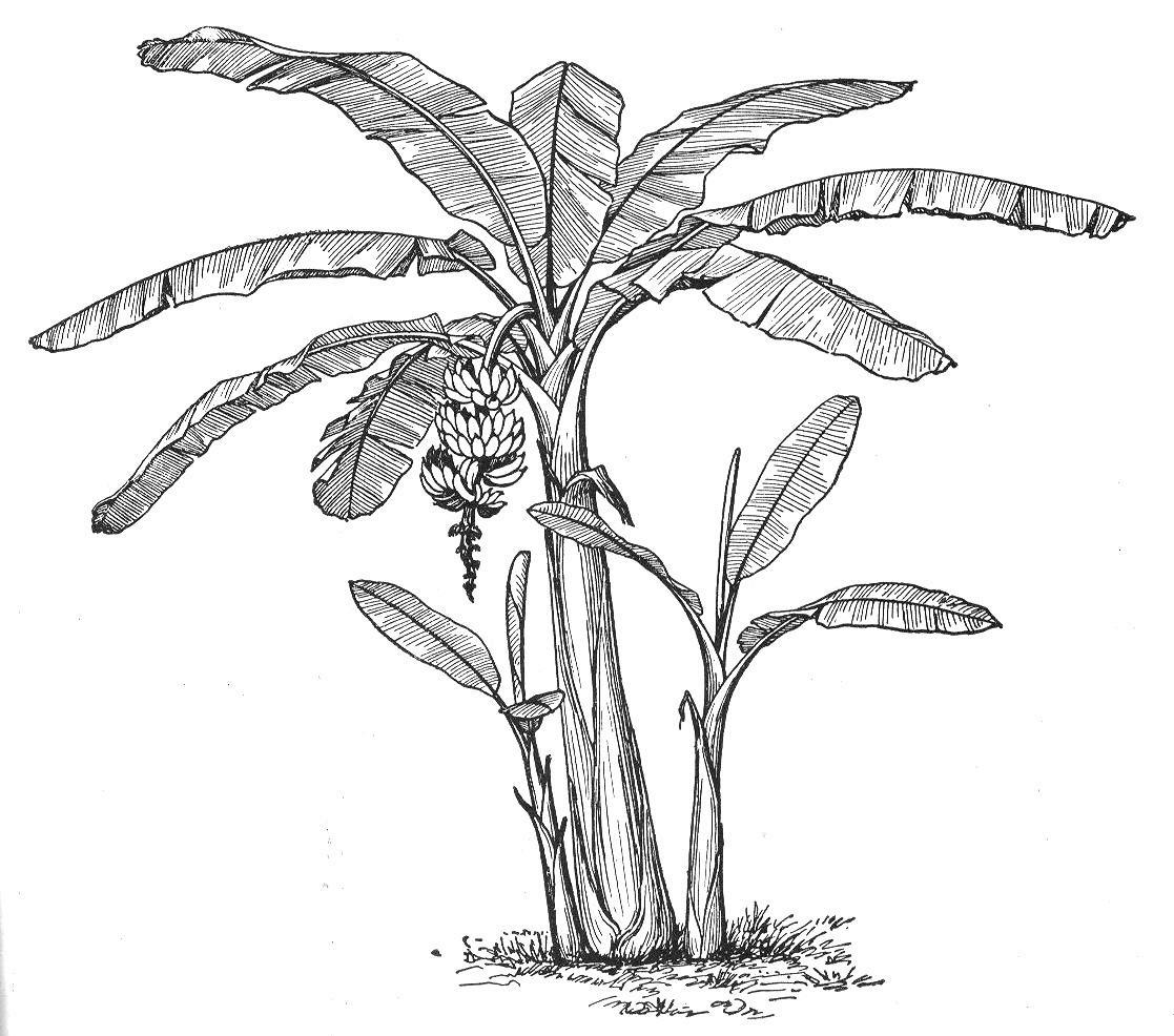 Banana Tree Trunk Templet
