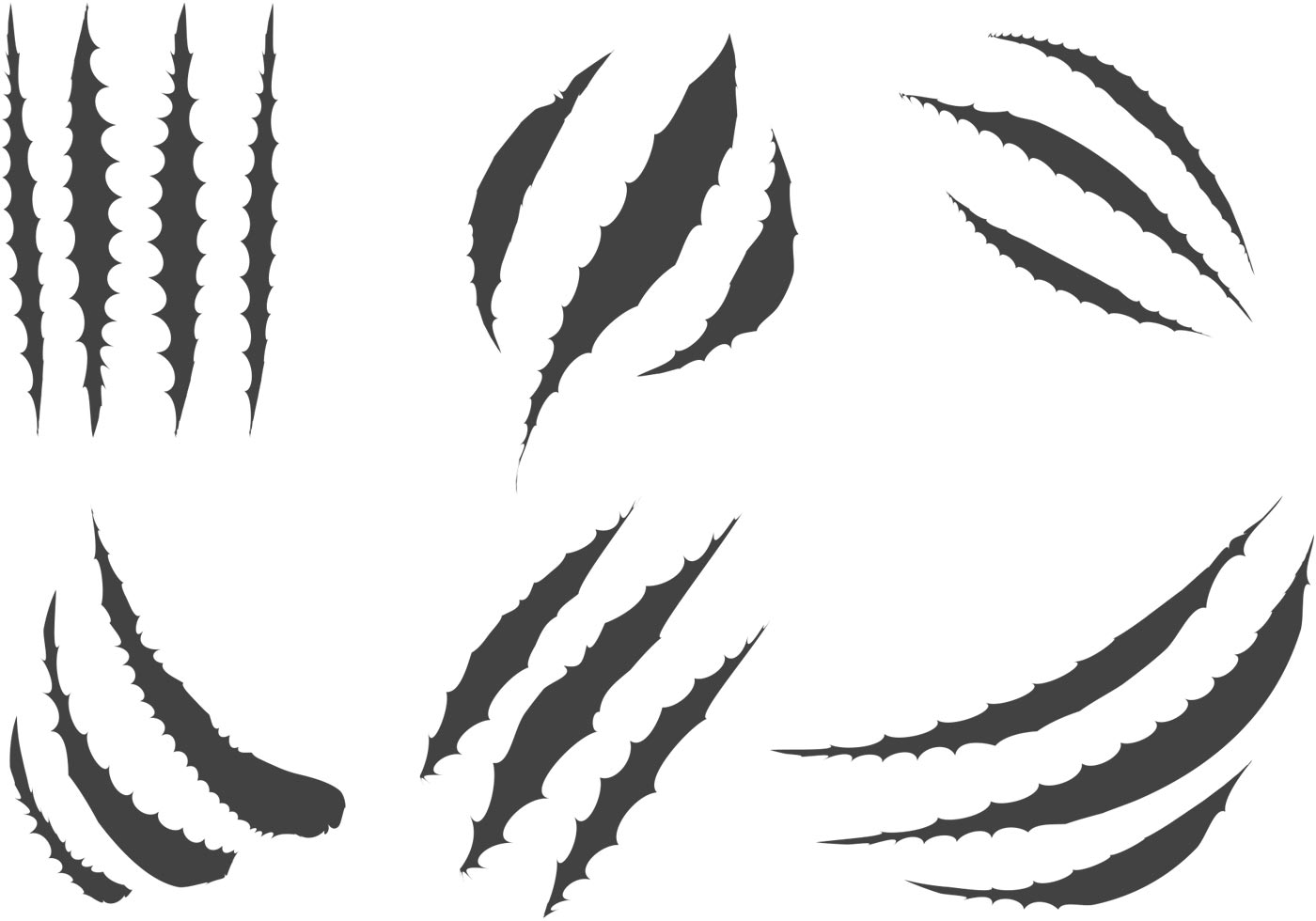 Free Tiger Scratch Vector Download Free Clip Art Free