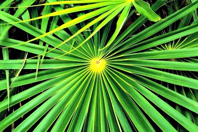 Free Palm Tree Leaves Download Free Clip Art Free Clip