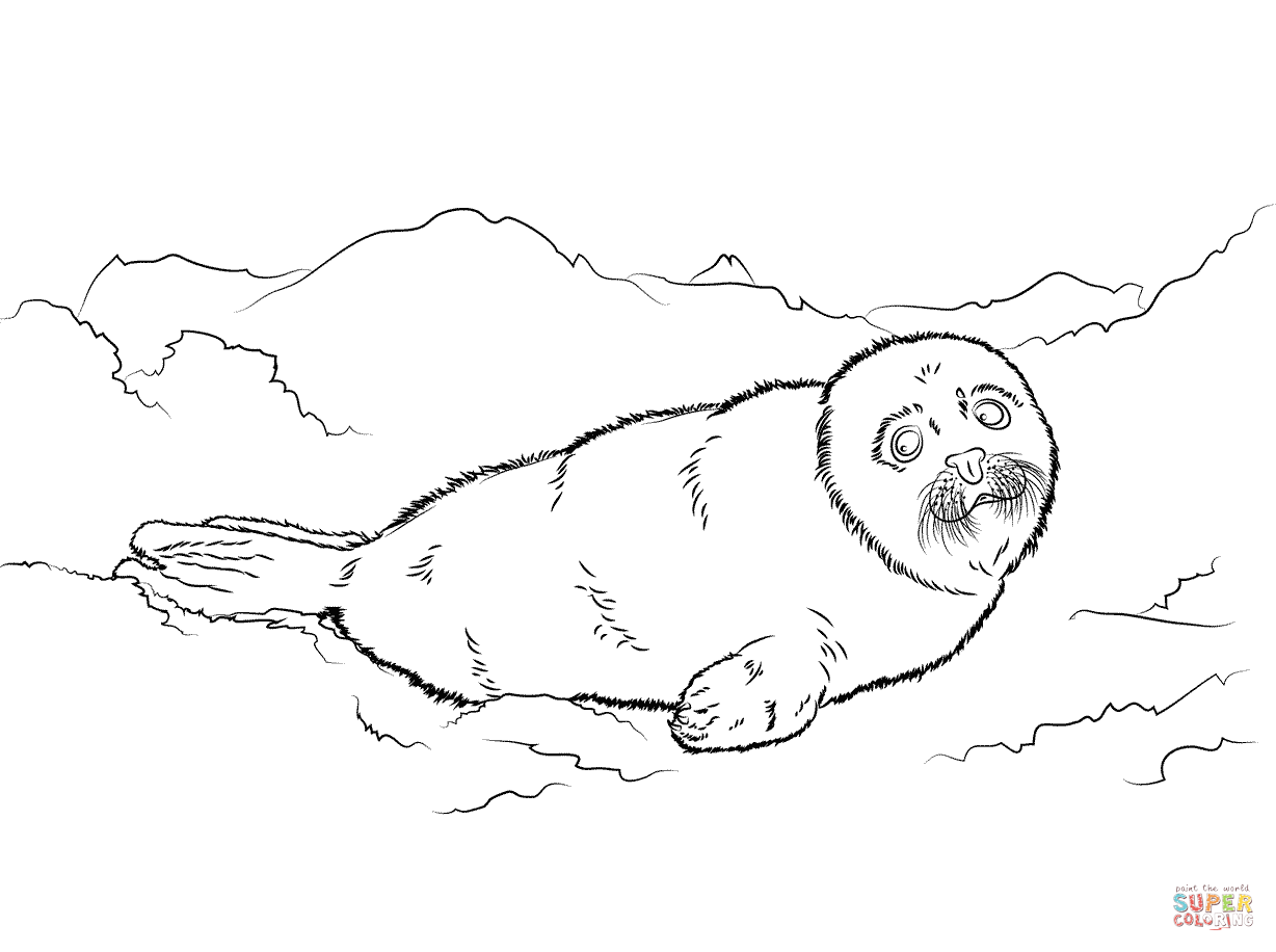Free Cute Seal Coloring Download Free Clip Art Free Clip