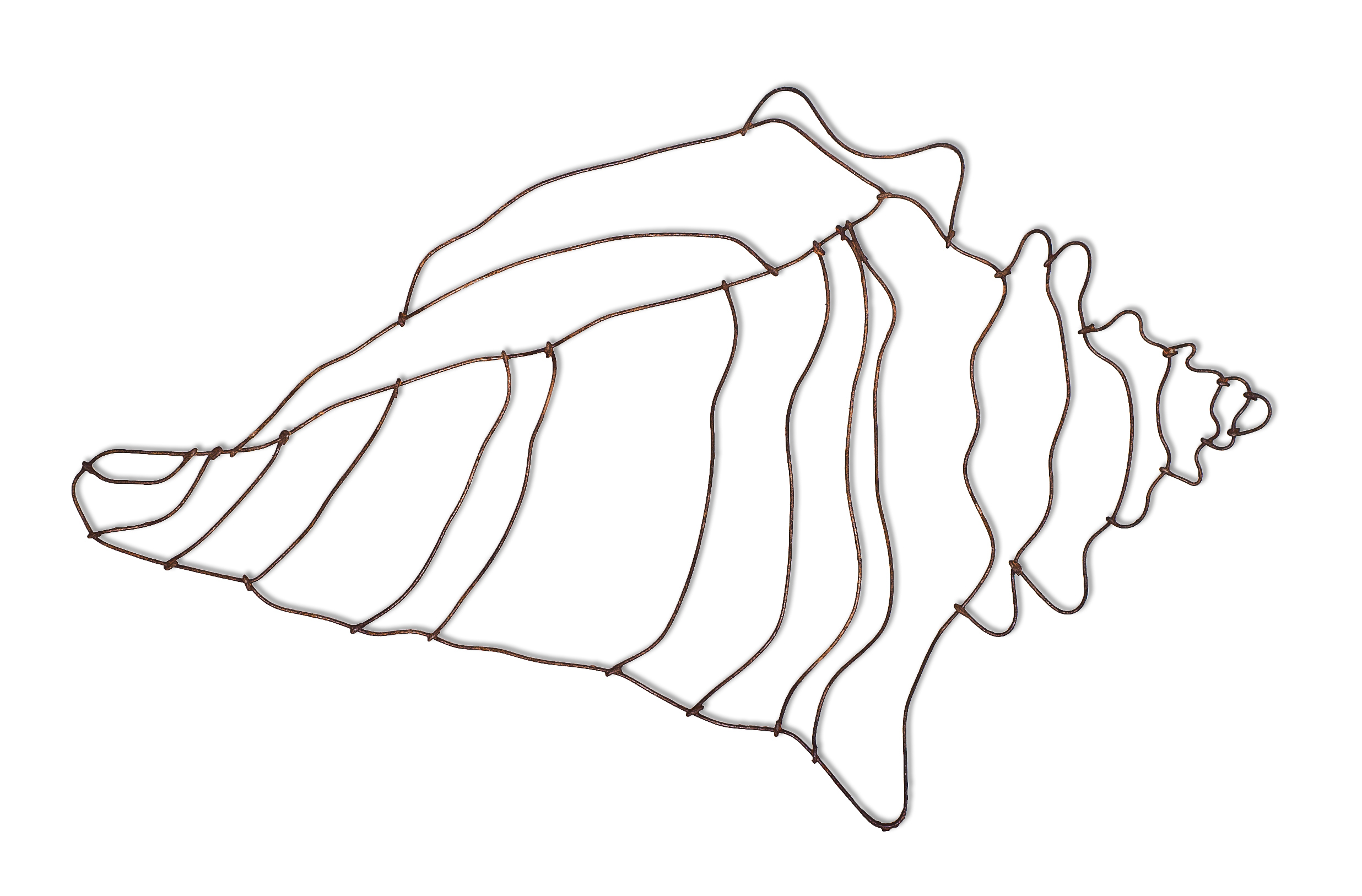 Free How To Draw A Conch Shell Download Free Clip Art