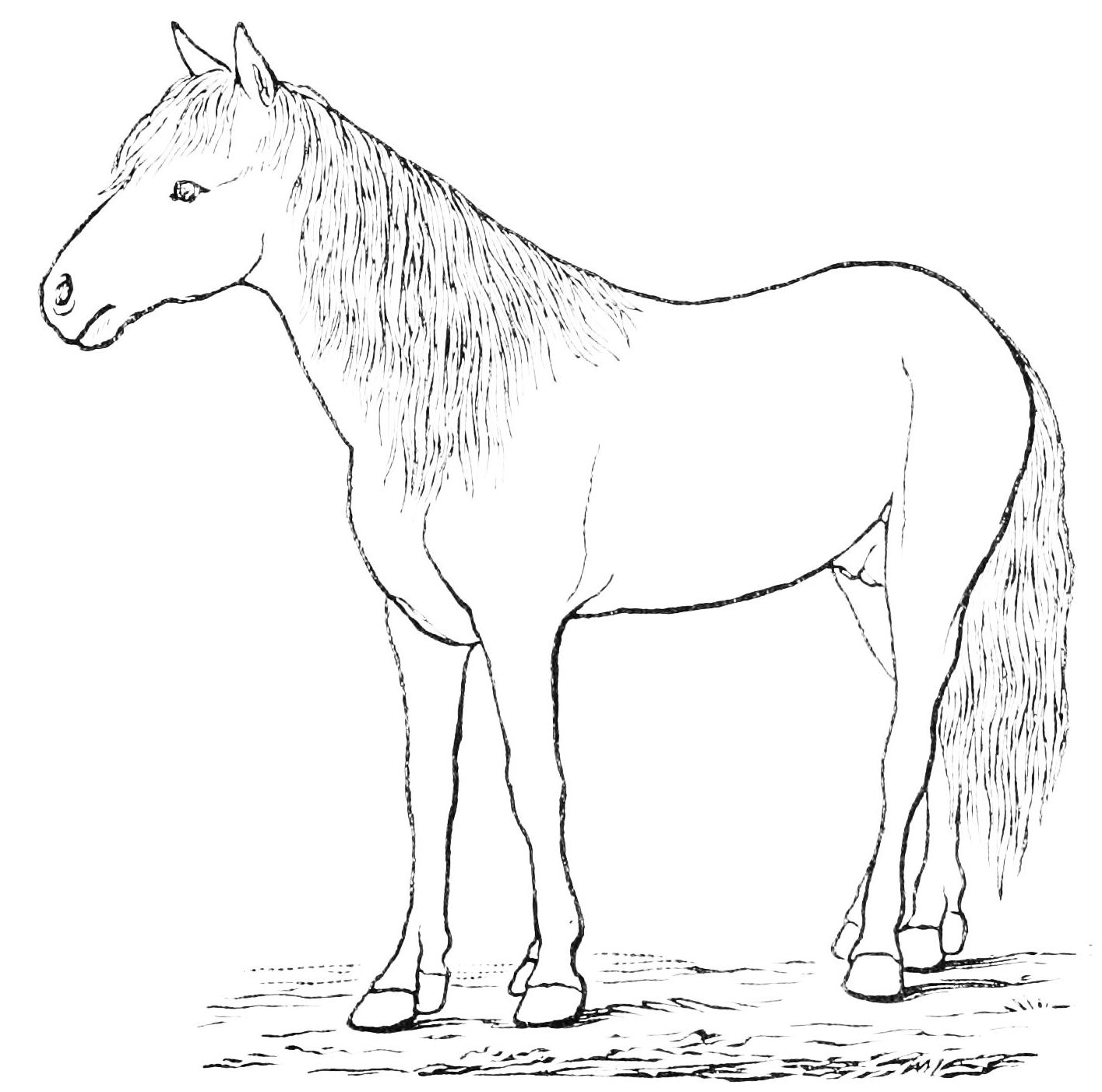 Free Horse Outline Download Free Clip Art Free Clip Art